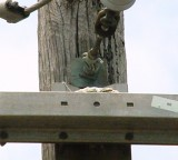 7388 Trigg Ave nest.JPG