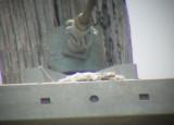 7402 Trigg Ave nest.JPG