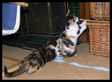 Mia's got the ribbon. Lily has a new interest.
