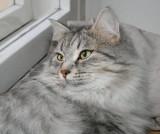 Izzi in November 2006