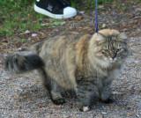 Hertta taking a walk