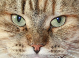hertta_closeup.jpg