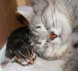 Tabbypoika ja mamma  onnellisina