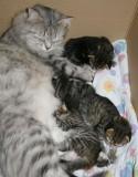 Izzi_kittens2w.jpg