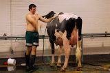 99 Showering with the Holstein.jpg
