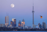 105 Moonrise Toronto with seagull 1.jpg