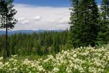 128 Cascade mountains from Newberry Crater.jpg