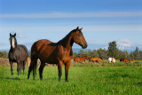 128 Mount Jefferson horses 3.jpg