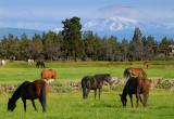 128 Mount Jefferson horses 6.jpg
