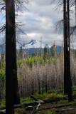 129 Mt Washington.jpg