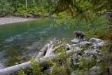 chilcoton grizzly landscape