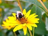 pollen frenzy ~ August 19th