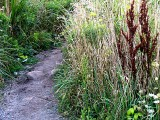 Late Summer Path ~ August 26th