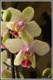 Orchid for reference of the previus 2 and the next 4