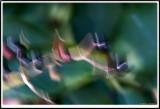 PICT9729.jpg