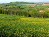 le printemps en Alsace.