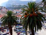 Camâra  Lobos harbour