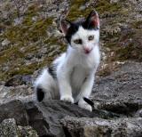 un chaton à Madère.