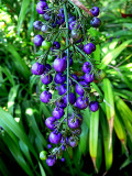 blue berries.
