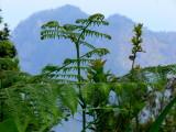 giant ferns.