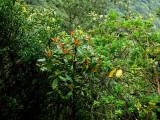 the deep laurel forest.