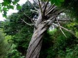 um tronco tortuoso .