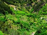 terrace cultivation.