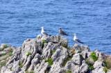 three seegulls