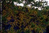 High Wattage Tree