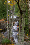 Maine stream.