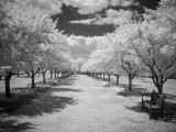 Infrared Gallery