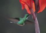 Animals in Costa Rica