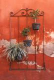 Potted Plants, Querétaro, Mex.