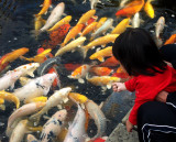 Little Girl Feeding Koi, Nagasaki