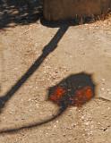 Lamp Shadow, Lake Merritt