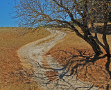 S curve and dry oaks, Briones