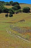 Oak landscape, Briones