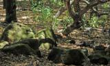 Mossy rocks at Briones