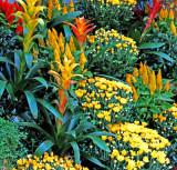 Beautiful display of many flowers