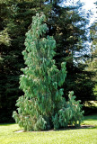 Unusual tree among many.
