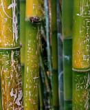 Grafitti on bamboo sections.