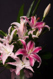 Tiger Lilies - Bouquet