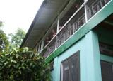 Asa Wright veranda