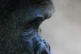 Photo Safari: Dallas Zoo + Fossil Rim