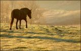 Horse in the morning ...