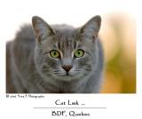 Cat Look ...