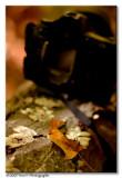 Photo d'automne ...
