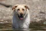 samson kootney lake 2007
