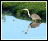 GBH Early Morning Reflections