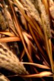 Native grasses  ~  March 18  [9]